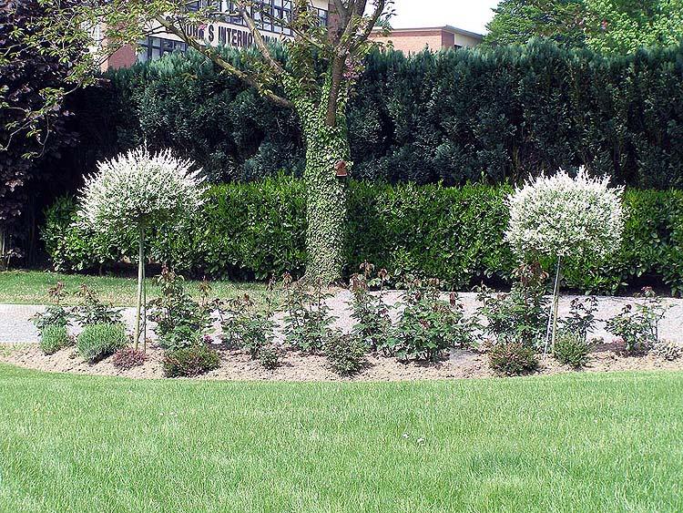Partie cr ation de jardin du site l 39 argousier entretien for Entretien jardin automne