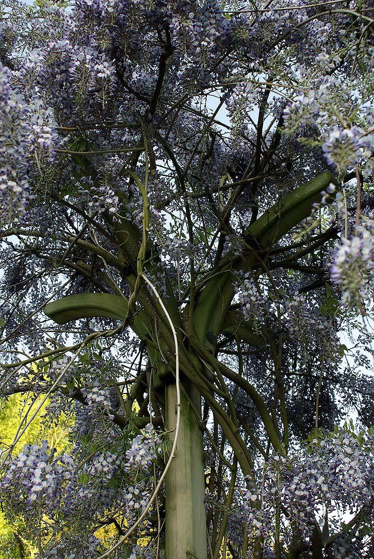 Partie cr ation de jardin du site l 39 argousier plantation for Plantation jardin